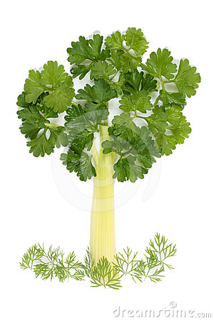 Tree of parsley and celery