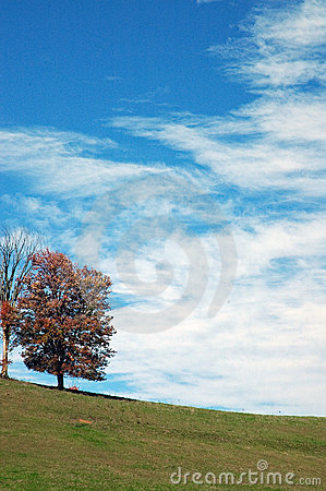 Tree, Pasture, Clouds