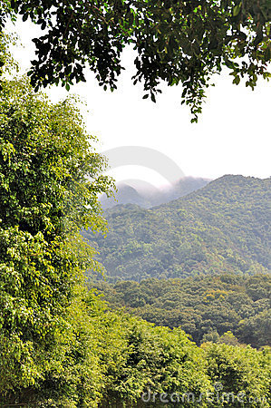 Tree and plant as background mountains