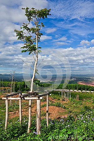 Tree planting and electric plant