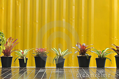 Tree pot on yellow wall