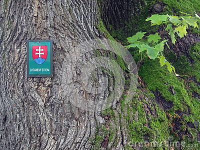 Tree protected by state, in Slovakia