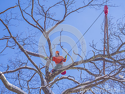 Tree pruning and cutting