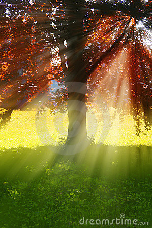 Tree with rays of sun