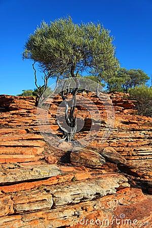 Tree on red rocks