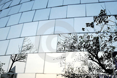 Tree reflect in chrome cubes wall