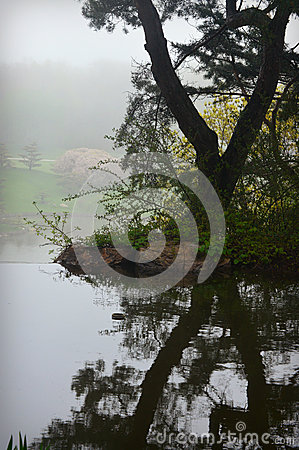 Free Tree Reflection Stock Images - 54036534