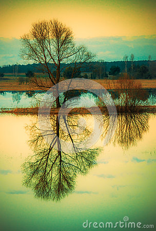 Free Tree Reflection In Water Royalty Free Stock Photos - 69485398