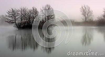 Tree reflection on lake
