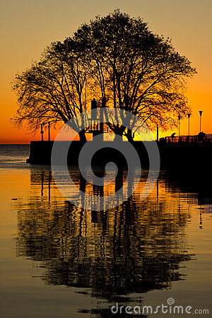 Free Tree Reflections Sunrise Royalty Free Stock Image - 59980476