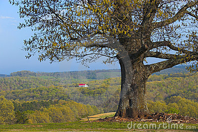 Tree and remote farm
