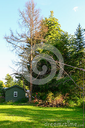 Free Tree Removal Cutting Down Stock Photography - 44399122