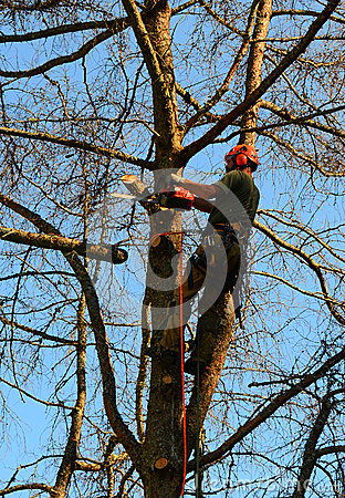 Free Tree Removal Trimming Stock Photos - 44399083
