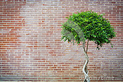 Tree with retro brick wall