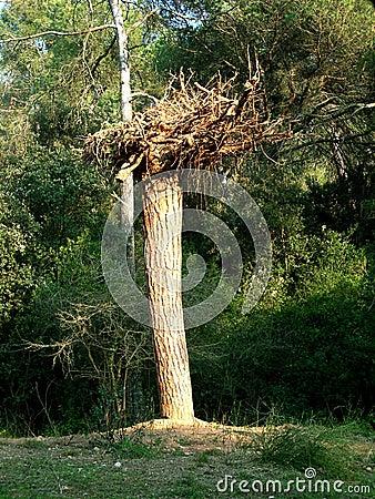 Tree in reverse
