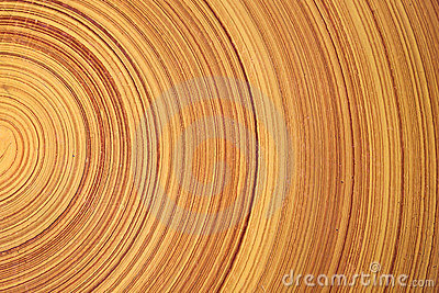 Tree ring. log. wood.