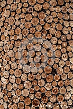 Free Tree Rings Royalty Free Stock Photos - 47395028