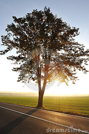 Tree on road