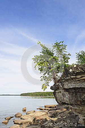 Tree on a rock