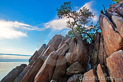 Tree on the rocks