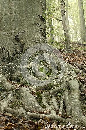Tree root 1