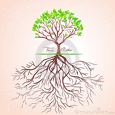Free Tree Roots Royalty Free Stock Photo - 27885285