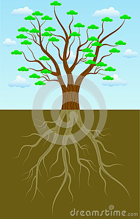 Free Tree Roots Stock Image - 31793021