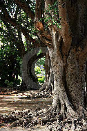 Free Tree Roots Stock Images - 3254154