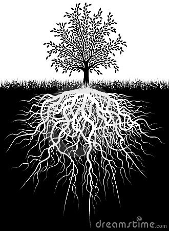 Free Tree Roots Royalty Free Stock Images - 6817069