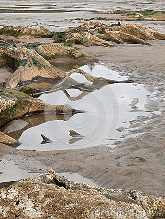 Tree roots exposed on sandy ocean beach