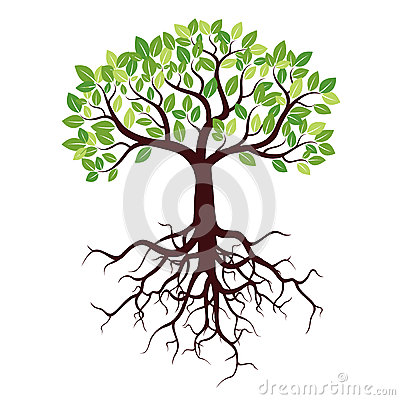 Tree with Roots and Leafs. Stock Photo