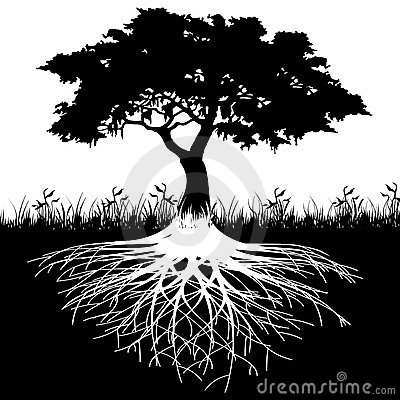 Free Tree Roots Silhouette Royalty Free Stock Photography - 22699227