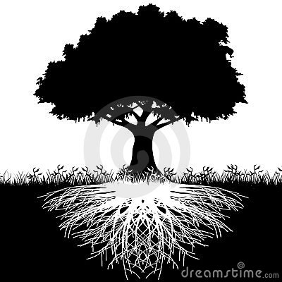 Tree roots silhouette Stock Photo