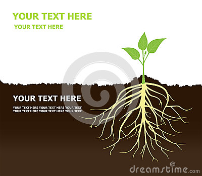 Tree with Roots Plant roots Soil Vector Illustration