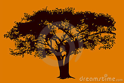 Tree in savanna