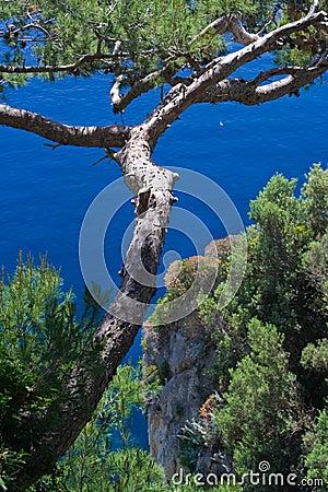 Tree on sea