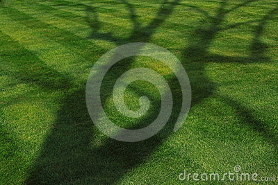 Tree Shadow on Green Lawn