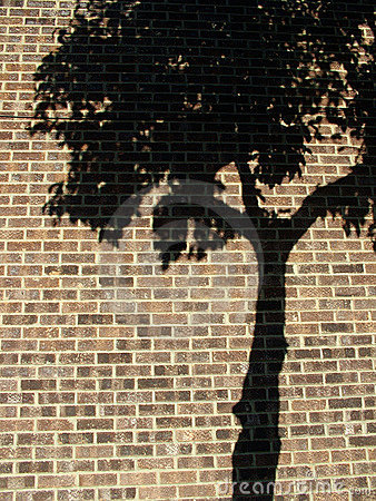 Free Tree Shadow Stock Photos - 590313