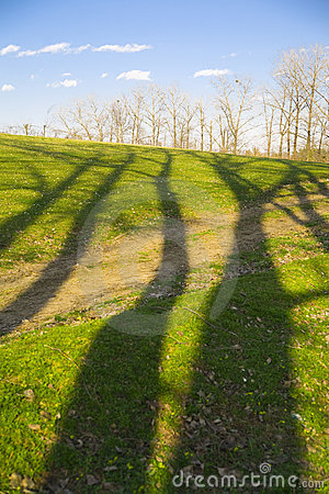 Free Tree Shadows And Forest Royalty Free Stock Photo - 20083255