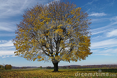 Tree Shedding Leaves