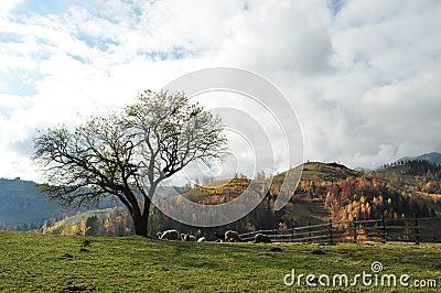 Tree and sheep