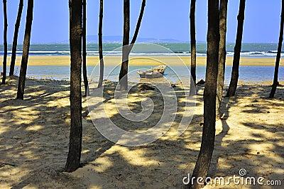 Tree and ship in seashore