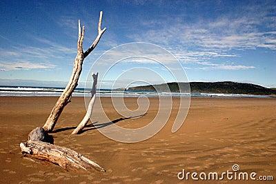 Tree On Shore