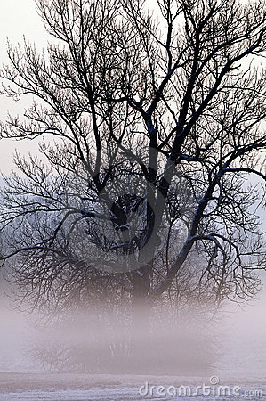 Tree shrouded in mist
