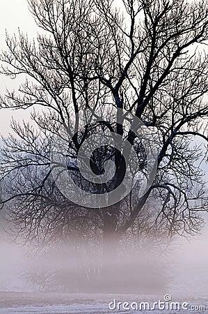 Tree shrouded in mist