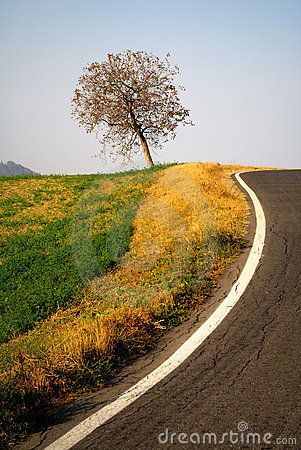 Tree by the side of a road
