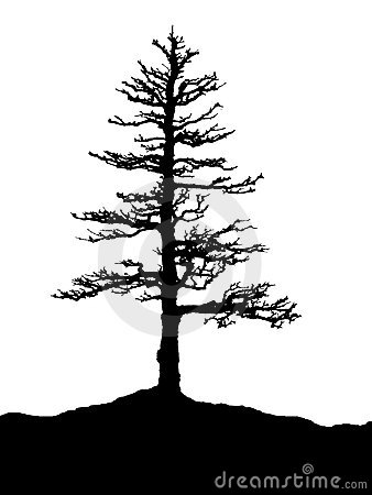 Tree Silhouette Royalty Free Stock Images Image 4214169