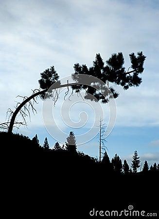 Free Tree Silhouette Stock Image - 9246881