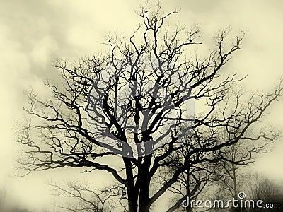 Tree silhouette bw