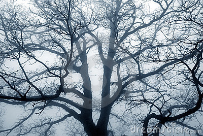 Tree silhouette on a foggy day.